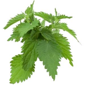 Comme guérir le microorganisme végétal du comprimé